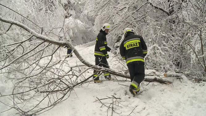 """Pod naporem śniegu łamią się gałęzie. """"Mogą spadać na osoby, które przechodzą"""""""